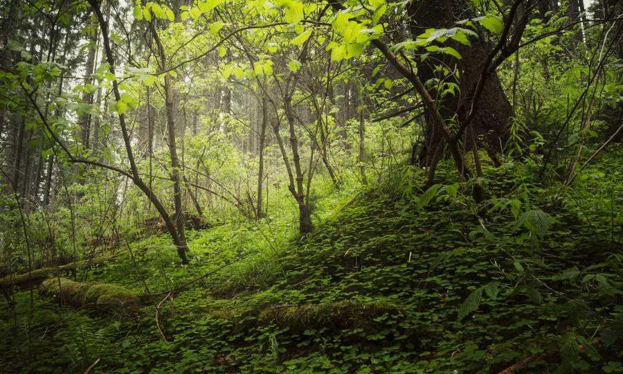 formazione ambientale